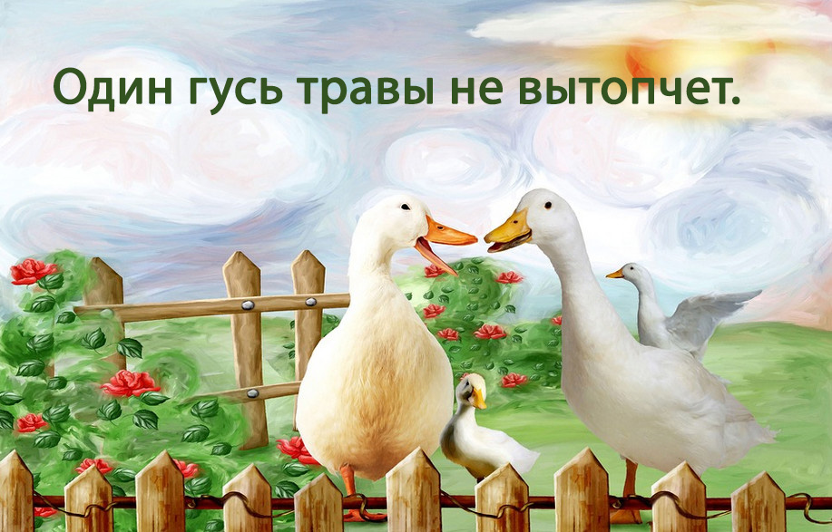 Русские пословицы с картинками