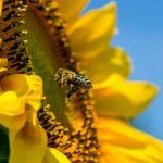 Пословицы и поговорки про насекомых