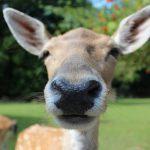 Пословицы про нос