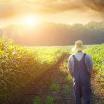 Пословица «Землю красит солнце, а человека труд»: значение, смысл
