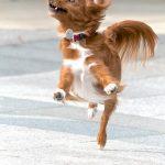 Пословицы со словом «собака», к слову «собака»
