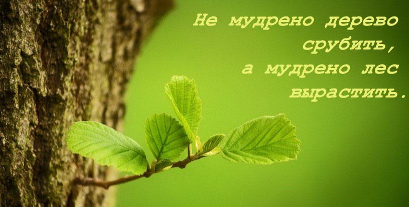 priroda-i-rasteniya-kazahstana-sochinenie-na-russkom-yazike