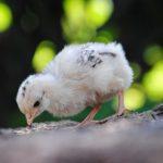 Пословицы о птицах и животных