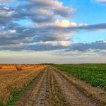 Загадки и пословицы о земле кормилице и растениях